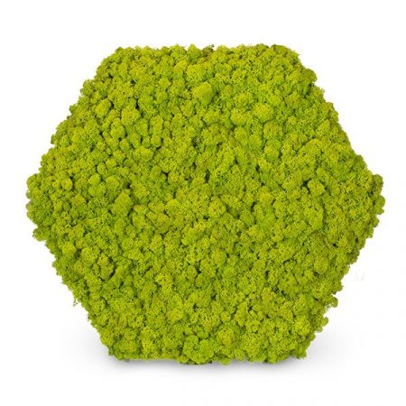 Zuzmócsempe - hexagon